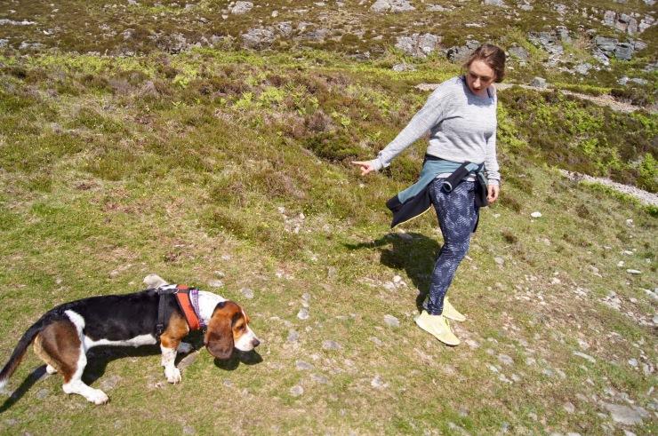 Isle of Skye dog herding